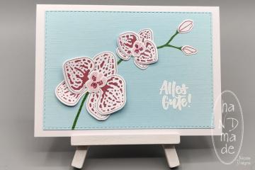 Alles_Gute_Orchideen